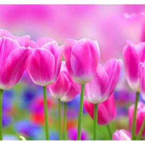 Тюльпаны 01127