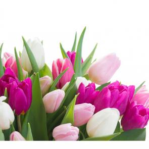 Тюльпаны 07959