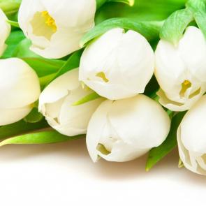 Тюльпаны 12768
