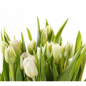 Тюльпаны 12929