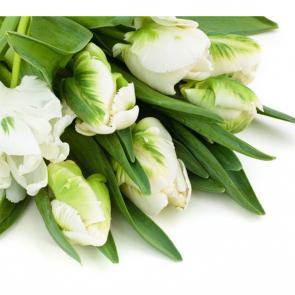 Тюльпаны 13361