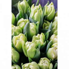 Тюльпаны 13943