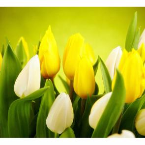 Тюльпаны 14410