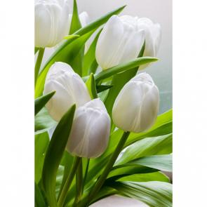 Тюльпаны 16268