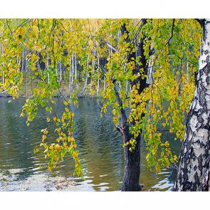 Березы у реки