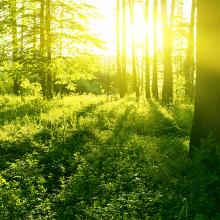 Утро в лесу летом