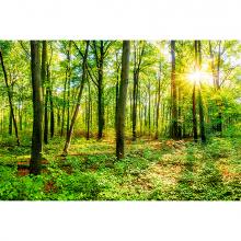 В лесу летом