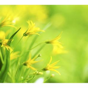 Весенние цветы желтые