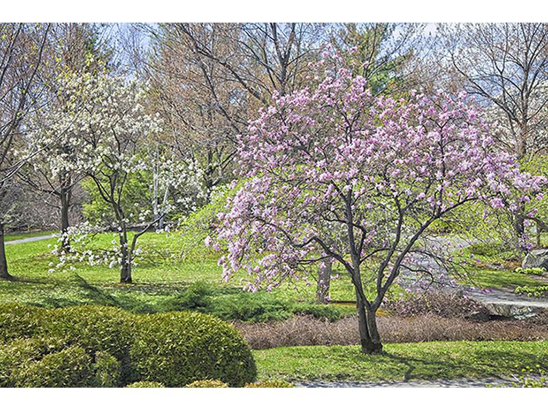 Весенний сад 1899
