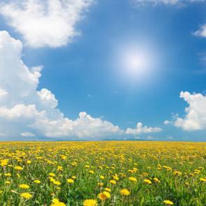 Весна 01273