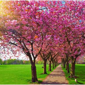 Весна 07496