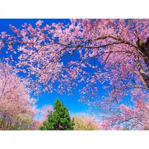 Весна 07582