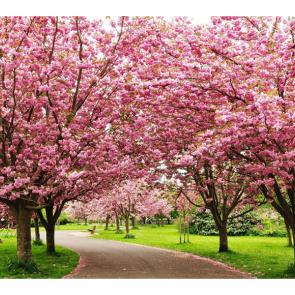 Весна 07609