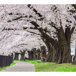Весна 13762