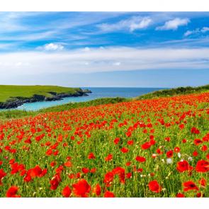 Весна 14072