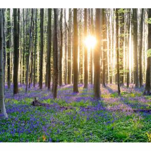 Весна 15336