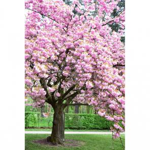 Весна 15356
