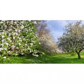 Весна 16407
