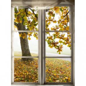 Вид из окна 13116