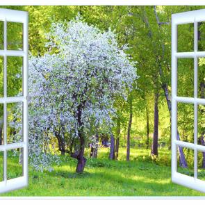 Вид из окна 13724