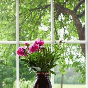 Вид из окна с вазой роз