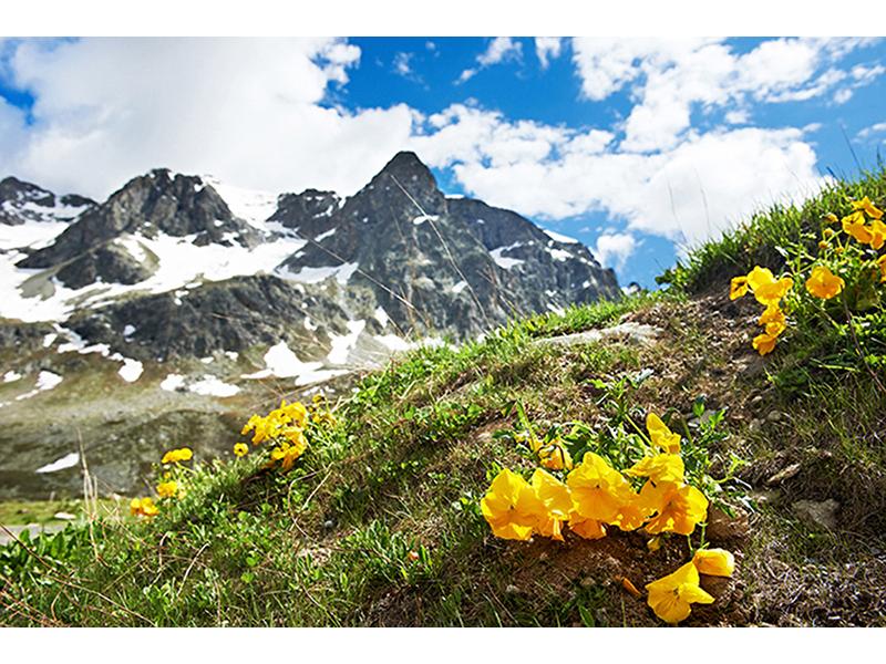 Вид на Альпы 1888
