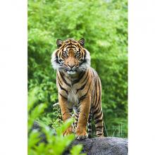 Встреча с тигром