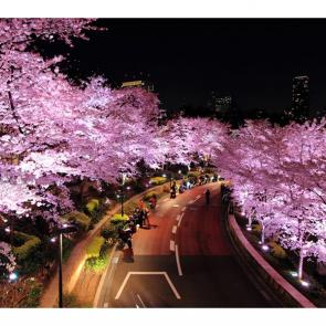 Аллея в Японии