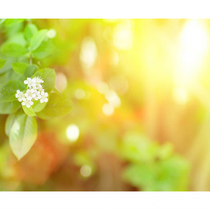 Зелень 5819