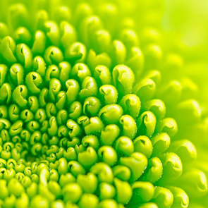 Зелень 5820