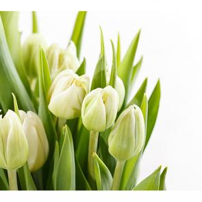 Зеленые тюльпаны