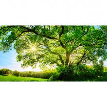Зеленый дуб
