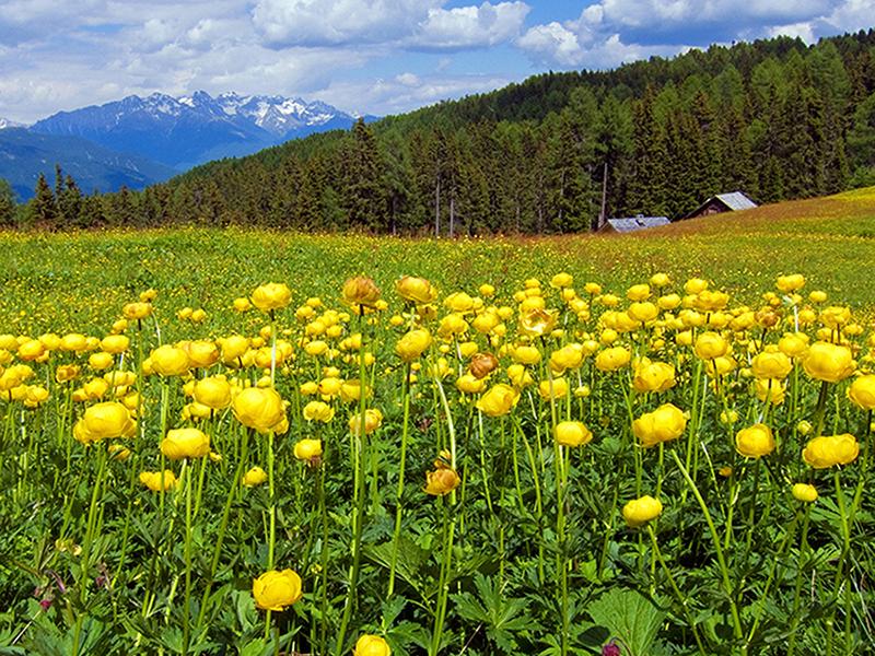 Желтое поле 1721