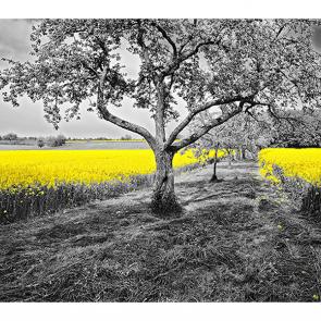 Желтый рапс