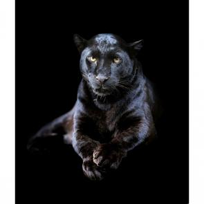 Животные 5518