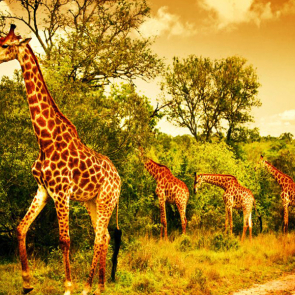 Животные 5533