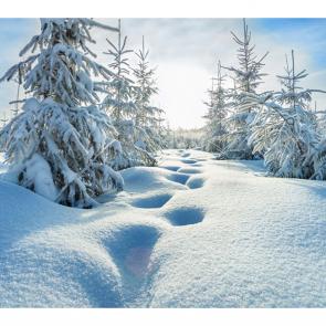 Зима 07519