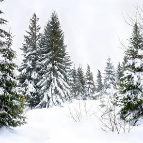 Зима 08112