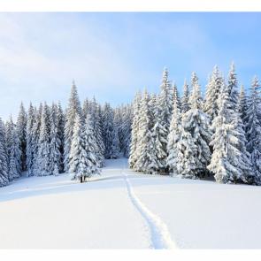 Зима 08120