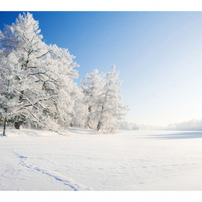 Зима 08541