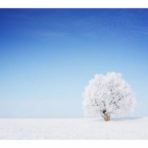 Зима 08548