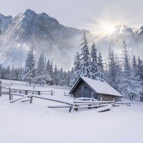 Зима 11445