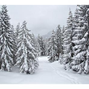 Зима 14159