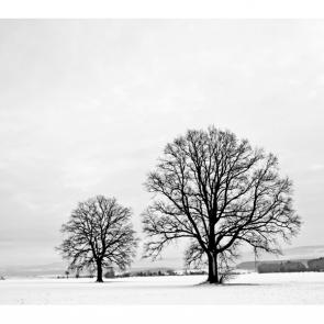 Зима 16244