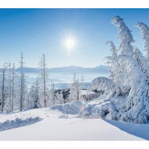 Зима 16521