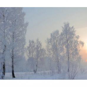 Зима 16547